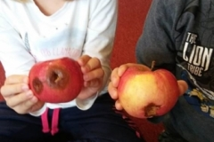 "Projekt badawczy ""Jabłko"" gr VI"